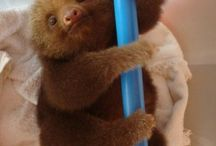 Sloth Overload
