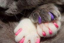 animais de estimação / tudo sobre e cuidados com animais de estimação