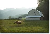 Love Of Horses - Pet / Dedicated To My Sweet Beautiful Sheba & Little Joey. RIP XXOO