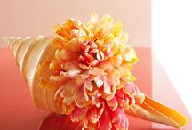 Frugal Decor from Shells / by Frugal Decorating Diva
