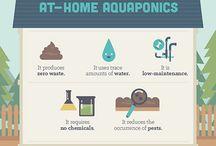 aquaponics awesomeness