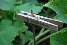 Vege garden ideas