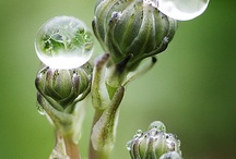 tetes (water dew drop bubble)
