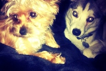 My Pets / by Miley Cyrus