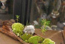 Terrariums And Plant Decor