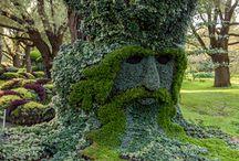 из растений,сад
