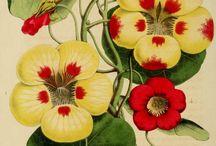 Arte floral . Botánica