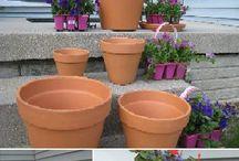 plante in ghiveci