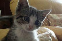 gatti and co
