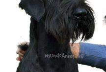 Mascotas: Perros