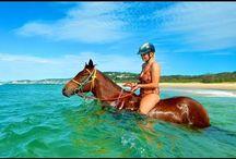 Pretty Horses New 2017 Video You Tube