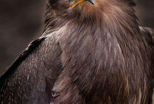 Adler <3