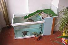 χελωνες