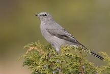 Birding Life List / by Bridget