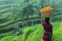 - Travel - Bali