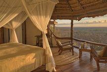 Safari - SA & Africa
