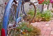 Bicycles / by Carolyn V