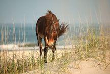 Horses / by Kimberly Snider King