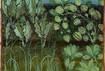 Ogród / średniowieczny obraz świata roślinnego i upraw ogrodowych