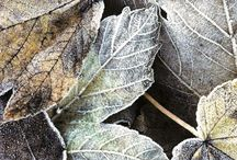 Aqua feuilles mortes