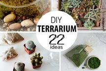 Terrarium / About to make some with my girls. Think we might need some ideas and info on what to do. Wish us luck.