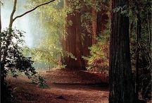 Лес,сад и дорога.