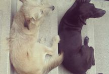 Dogs^^