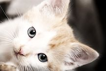 Fotos / Animales