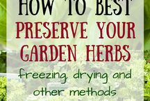 Recipes - preserving herbs