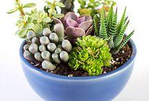 piante grasse e giardino