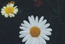 Flowers ·♥·