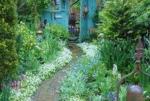 Teeny tiny garden / by Grace O'Leary