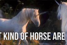 Wild manes / Horses