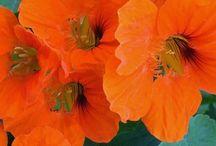 N -- Flowers