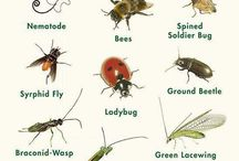 Insects & Pests