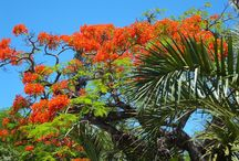Reunion, France / Miejsce na wakacje