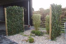Zielone ogrodzenie