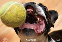 142. Success