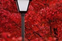 Lovly red