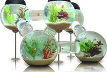 My House Beautiful - Aquariums / by Martha Hall