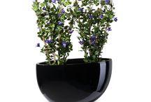 Plant Bowls