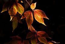 Autumn/Herfst
