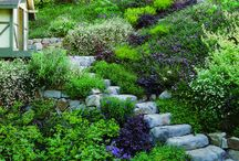 Hillside gardens / Ideas to make gardening on a 90 degree angle less of a bitch!