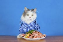 Carlton, a somewhat crazy cat / The life and times of the internet's cleverest cat.