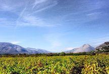 UVA / RAÏM / La uva es un producto típico de nuestra zona, sobre todo la variedad del moscatell. La uva pasa  y el vino, junto con la almendra, son nuestros productos estrella.