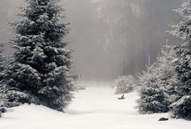 Winter Forest®