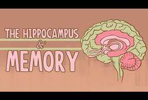 Executive Function - Memory