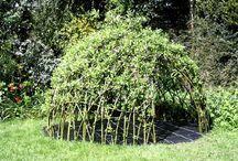 trükkös kerti növények