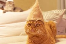 cats in own hair hats