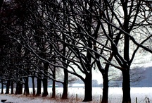 I love trees / by Anne Georgakilas